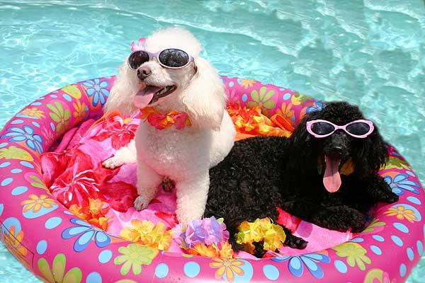 dog-summer-2
